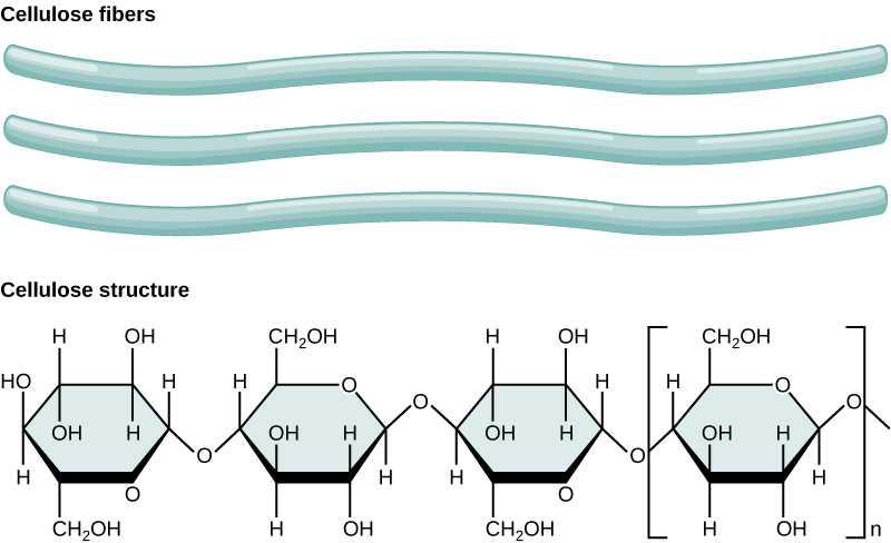 Key Difference Between Chitin and Cellulose