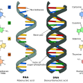 Difference Between 16s rRNA and 16s rDNA