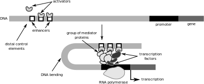 Key Difference Between General and Specific Transcription Factors
