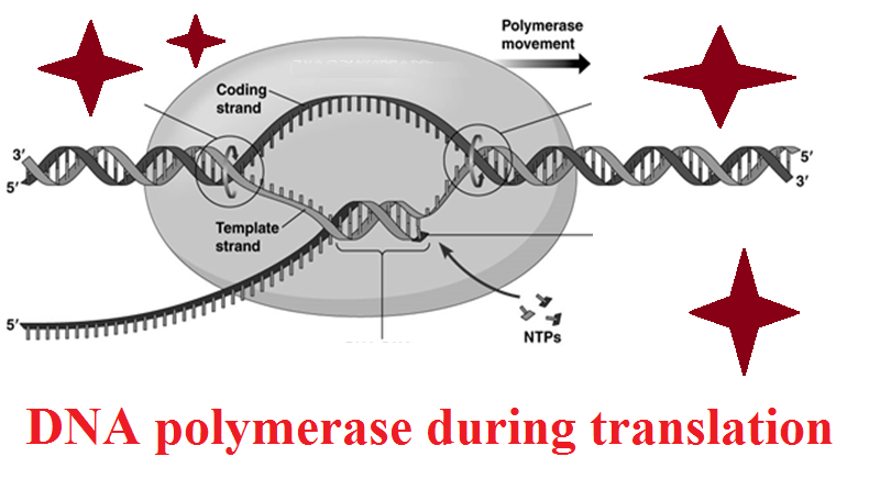 Difference Between Intracellular and Extracellular Enzymes