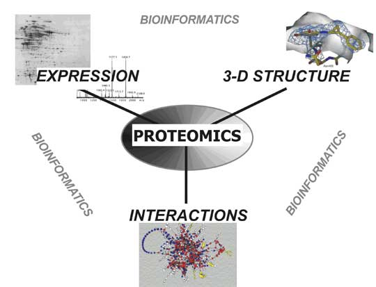 Difference Between Proteomics and Transcriptomics