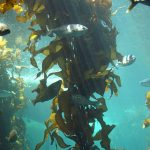 Difference Between Red Algae and Brown Algae