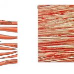 Difference Between Striated Non Striated and Cardiac Muscles