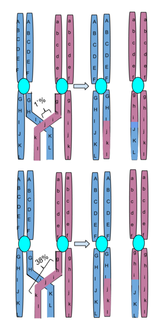 Key Difference Between Translocation and Crossing Over