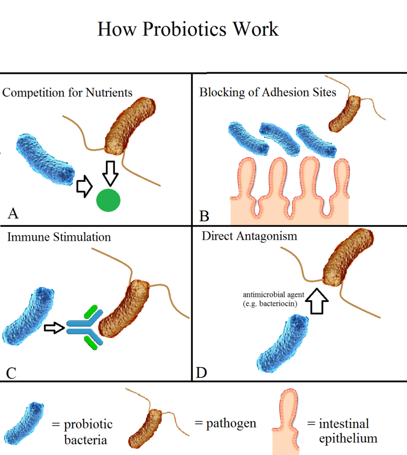 Key Difference Between Acidophilus and Probiotics