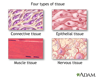 Key Difference - Blood Clot vs Tissue