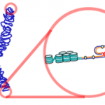 Difference Between Centromere and Telomere