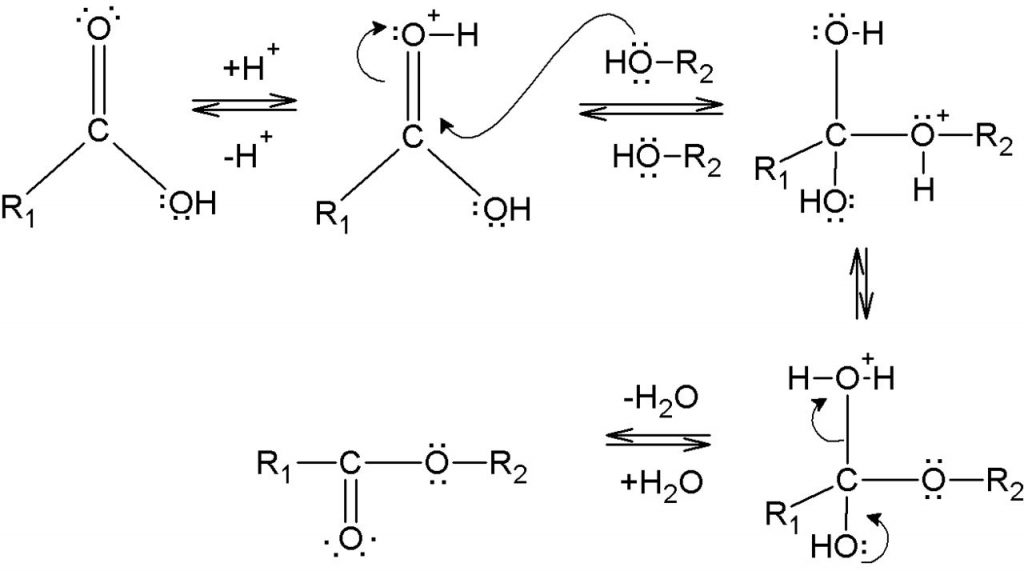 Difference Between Esterification and Transesterification
