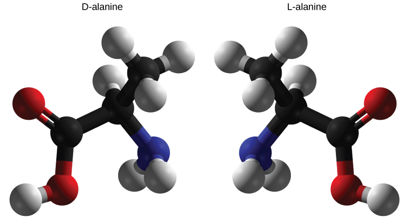 Difference Between L and D Amino Acids