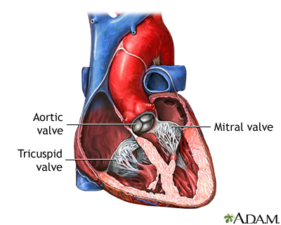 Key Difference Between Mitral Valve and Tricuspid Valve