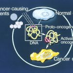 Difference Between Oncogene and Tumor Suppressor Gene