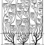 Difference Between Ontogeny and Phylogeny