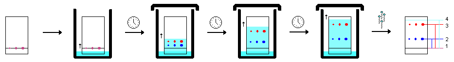 Difference Between Paper Thin Layer and Column Chromatography_Figure 2
