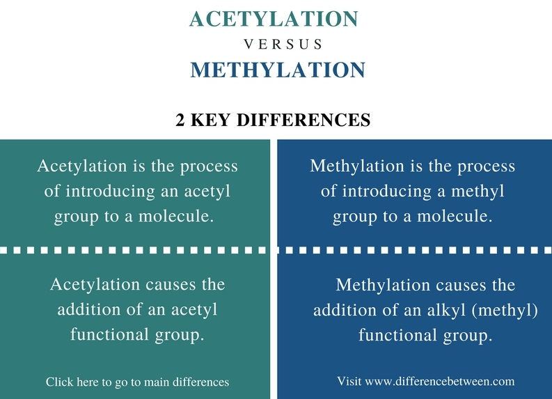 Difference Between Acetylation and Methylation_Comparison Summary