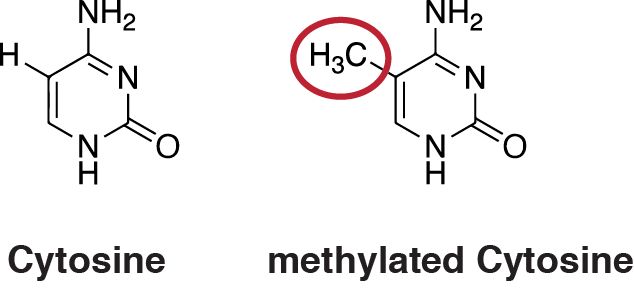 Key Difference Between Acetylation and Methylation