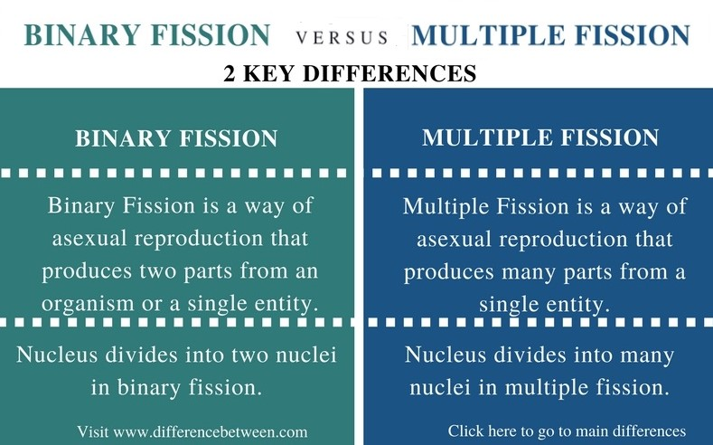Difference Between Binary Fission and Multiple Fission_Comparison Summary