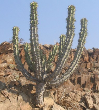 Key Difference Between Hydrophytes Mesophytes and Xerophytes