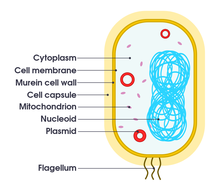 Key Difference Between Spore and Vegetative Cell