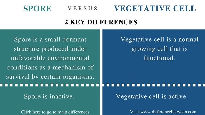 Difference Between Spore and Vegetative Cell_Comparison Summary