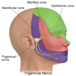 Difference Between TMJ and Trigeminal Neuralgia