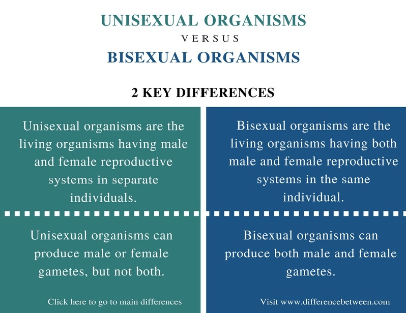 Define bisexual and unisexual