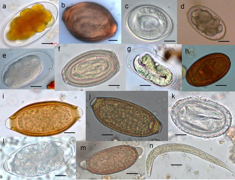 Key Difference Between Worms and Parasites