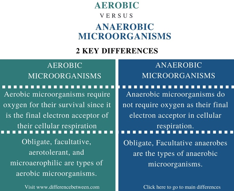 Difference Between Aerobic and Anaerobic Microorganisms - Comparison Summary