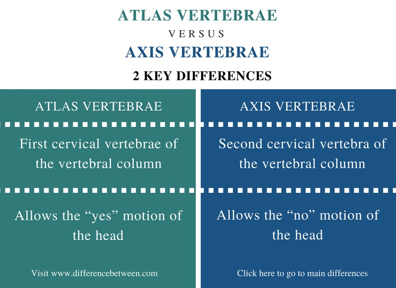 Difference Between Atlas and Axis Vertebrae - Comparison Summary
