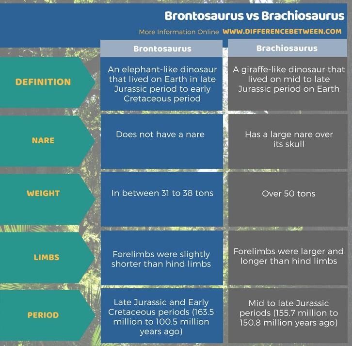 Difference Between Brontosaurus and Brachiosaurus in Tabular Form