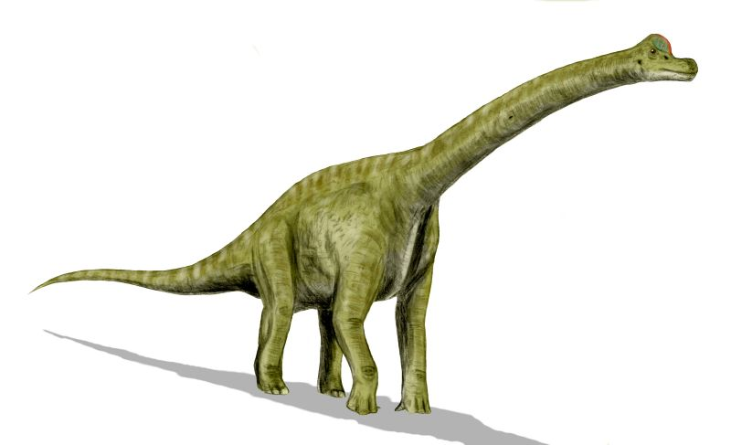 Difference Between Brontosaurus and Brachiosaurus