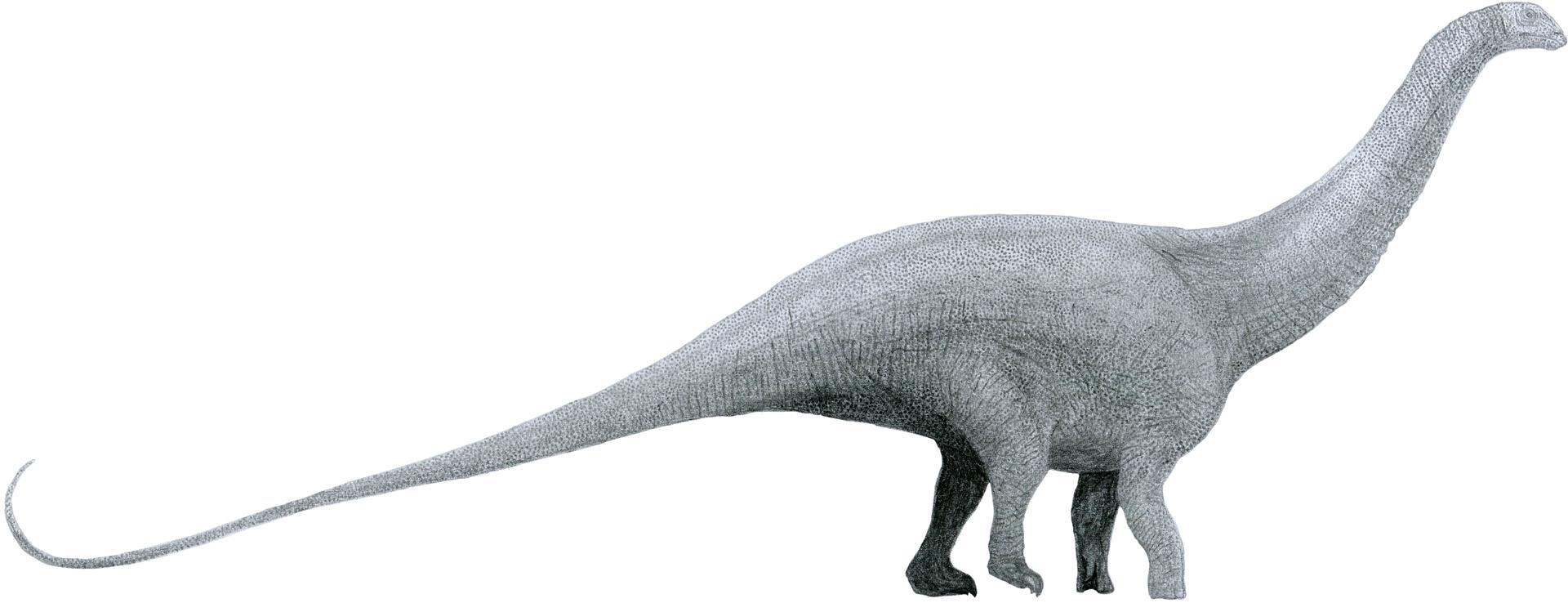 Key Difference - Brontosaurus vs Brachiosaurus