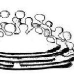 Difference Between Golgi Bodies and Mitochondria