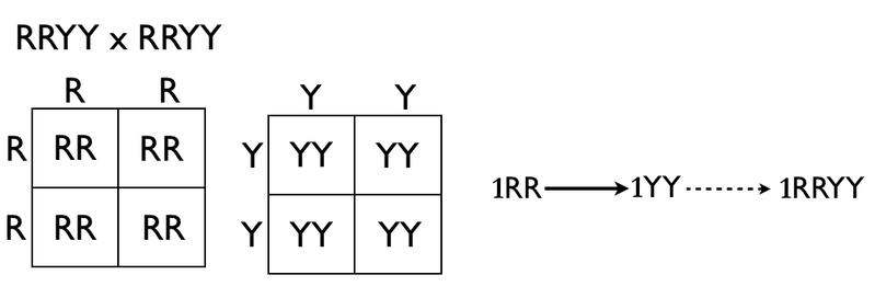 Key Difference - Heterozygous vs Homozygous Individuals