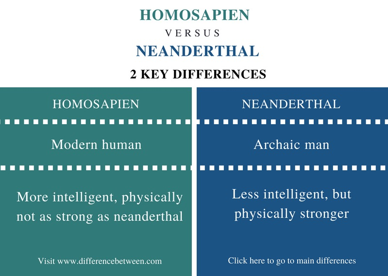 Difference Between Homosapien and Neanderthal - Comparison Summary