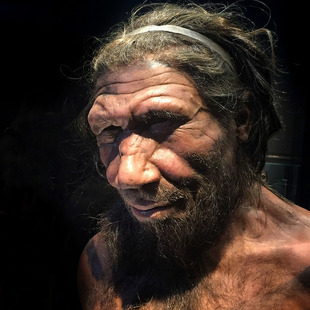 Difference Between Homosapien and Neanderthal