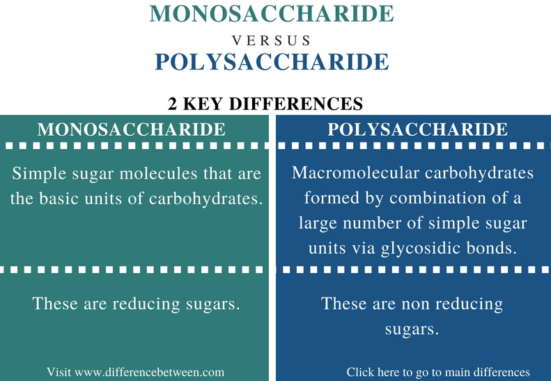 Difference Between Monosaccharide and Polysaccharide ...