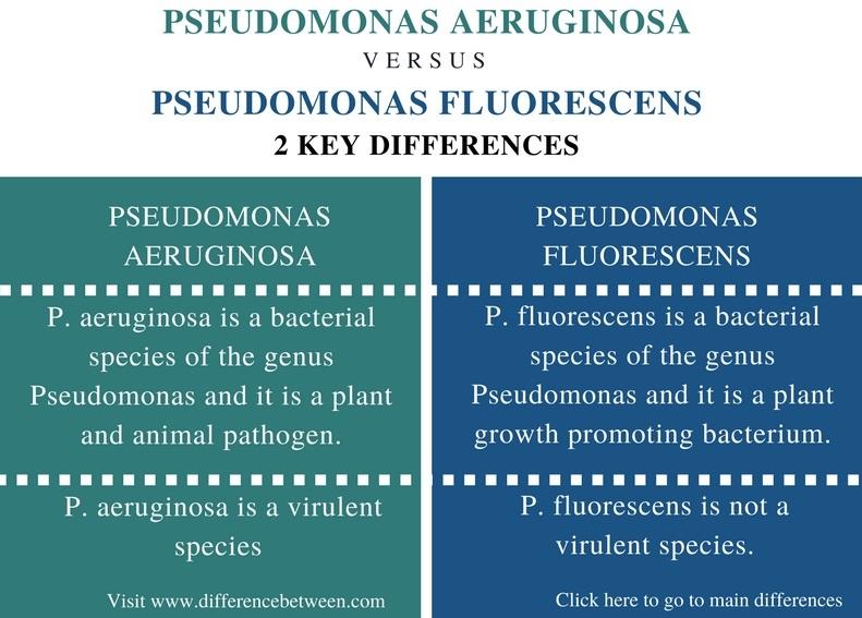 Difference Between Pseudomonas aeruginosa and Pseudomonas fluorescens - Comparison Summary_Fig 1
