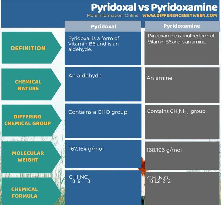 Difference Between Pyridoxal and Pyridoxamin - Tabular Form