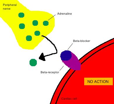 Key Difference - Beta Blocker vs Calcium Channel Blocker