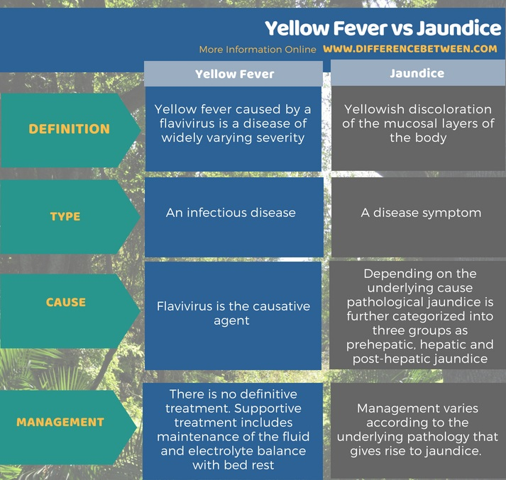 Difference Between Yellow Fever and Jaundice in Tabular Form