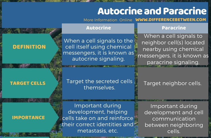 Difference Between Autocrine and Paracrine in Tabular Form