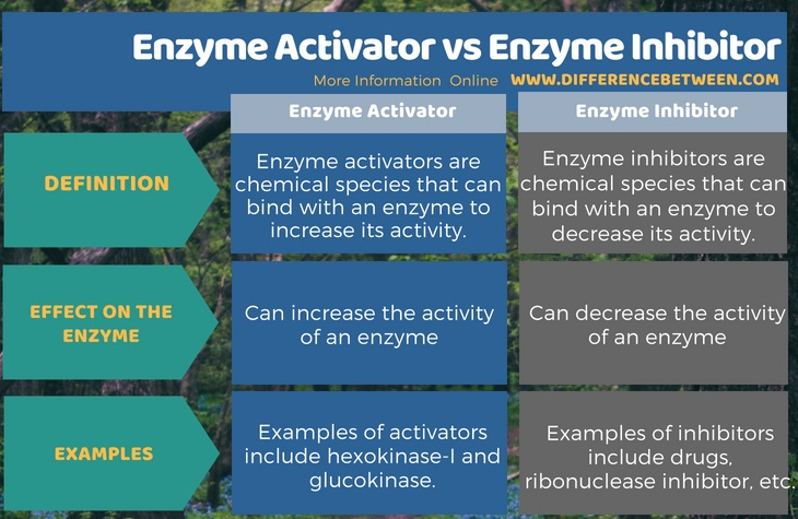 Difference Between Enzyme Activator and Enzyme Inhibitor in Tabular Form