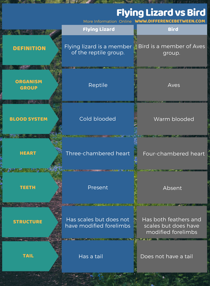Difference Between Flying Lizard and Bird in Tabular Form
