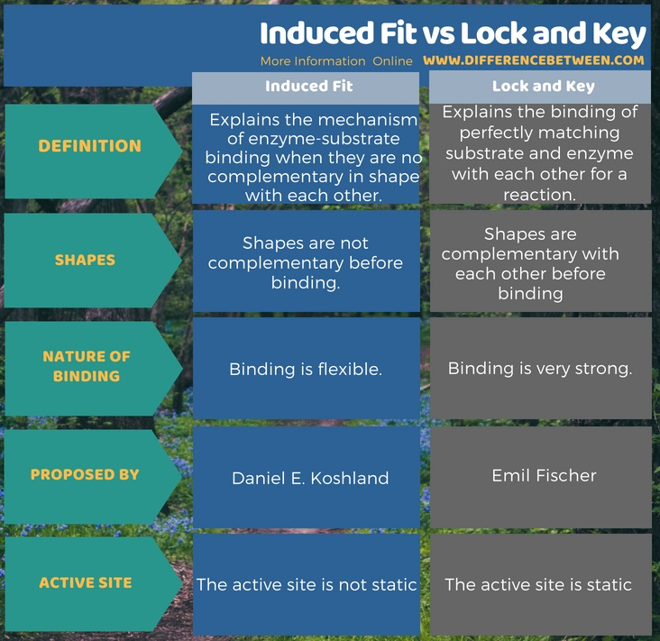 Difference Between Induced Fit and Lock and Key in Tabular Form