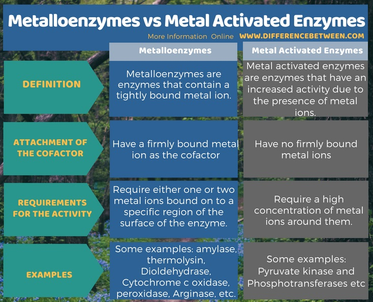 Difference Between Metalloenzymes and Metal Activated Enzymes in Tabular Form