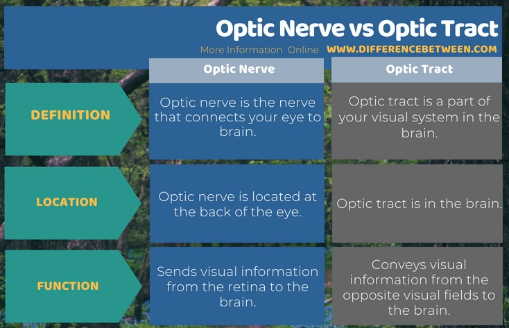 Difference Between Optic Nerve and Optic Tract in Tabular Form