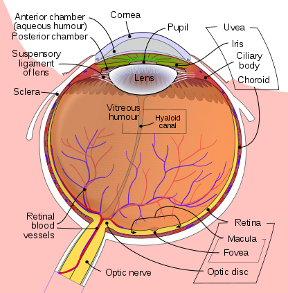 Key Difference Between Optic Nerve and Optic Tract