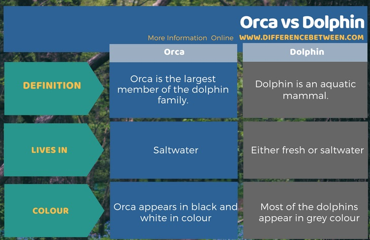 Difference Between Orca and Dolphin in Tabular Form