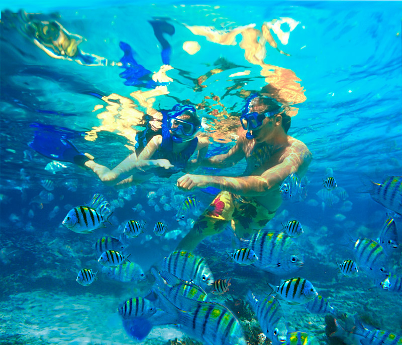 Difference Between Snorkeling and Scuba Diving
