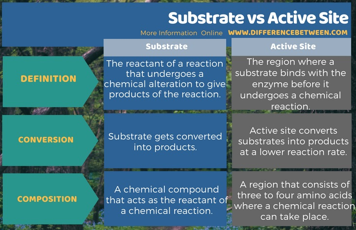Difference Between Substrate and Active Site in Tabular Form